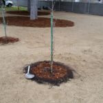 Planting Trees - Cause Marketing