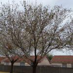 beautiful tree - Cause Marketing